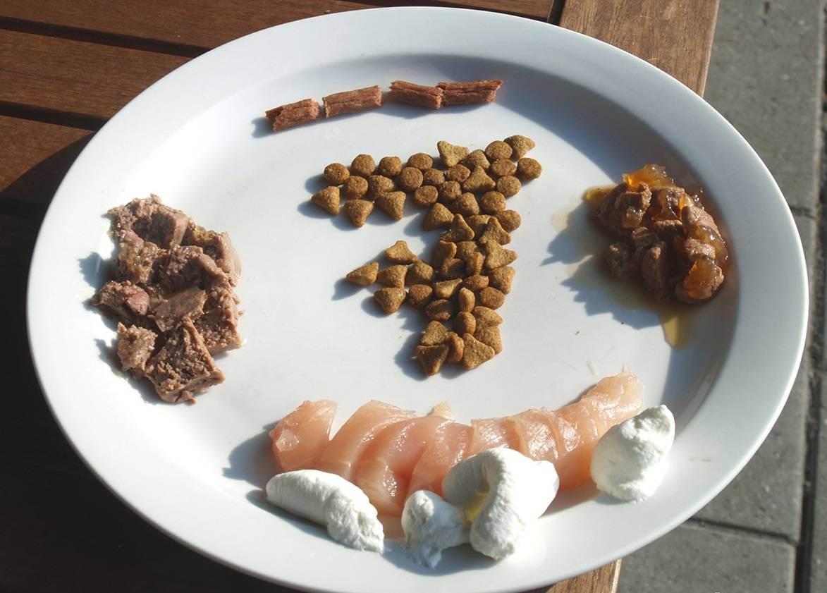 Из чего делают кошачий корм сухой: каков его состав, можно ли приготовить в домашних условиях?