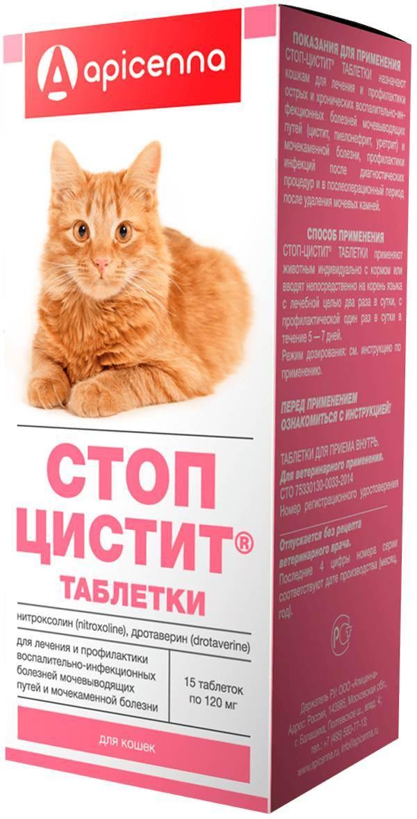Стопцистит инструкция по применению для кошек - кошки и собаки простыми словами