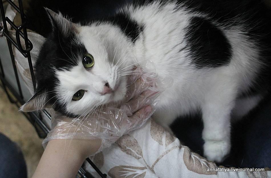Почему у некоторых людей не приживаются домашние животные? плачу...