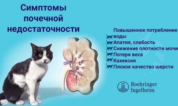Терминальная стадия хпн у кошек: признаки, лечение и продолжительность жизни