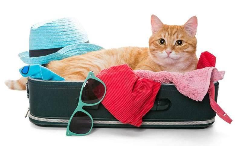 Советы владельцам, как найти пропавшего кота в день пропажи и через время