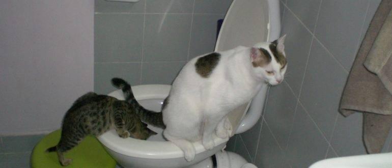 Кастрированный кот топчется и возбуждается, что делать?