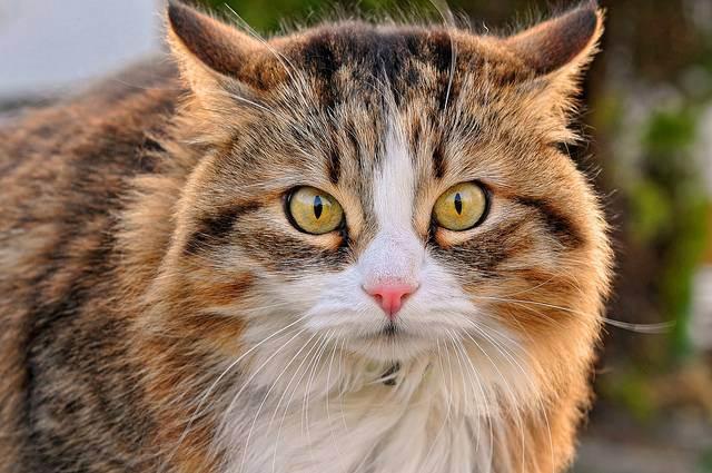 Лечение мочекаменной болезни (мкб) у котов — диагностика, причины, симптомы, профилактика