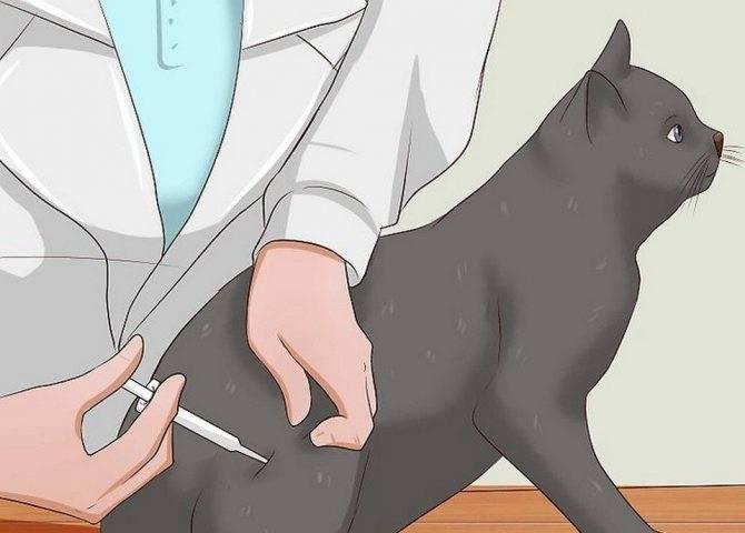 Как делать укол коту или кошке в холку | видео, как правильно ставить