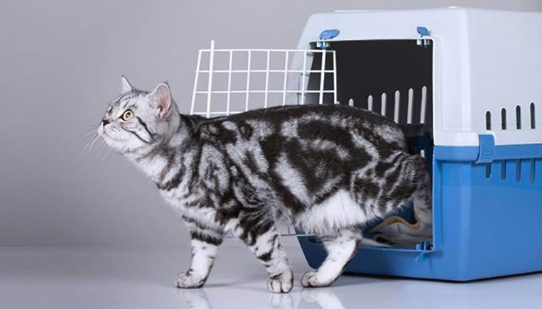 Перевозка кошек в самолёте и в поезде