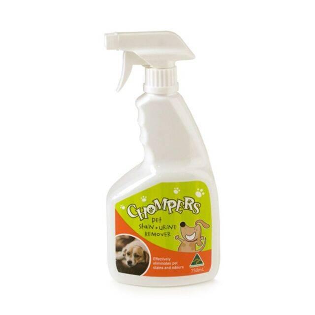Как выводить запах кошачьей мочи