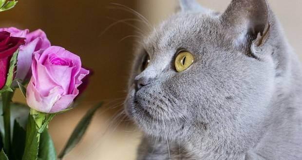 Отравление кошки: признаки, симптомы, лечение | ветеринарная служба владимирской области