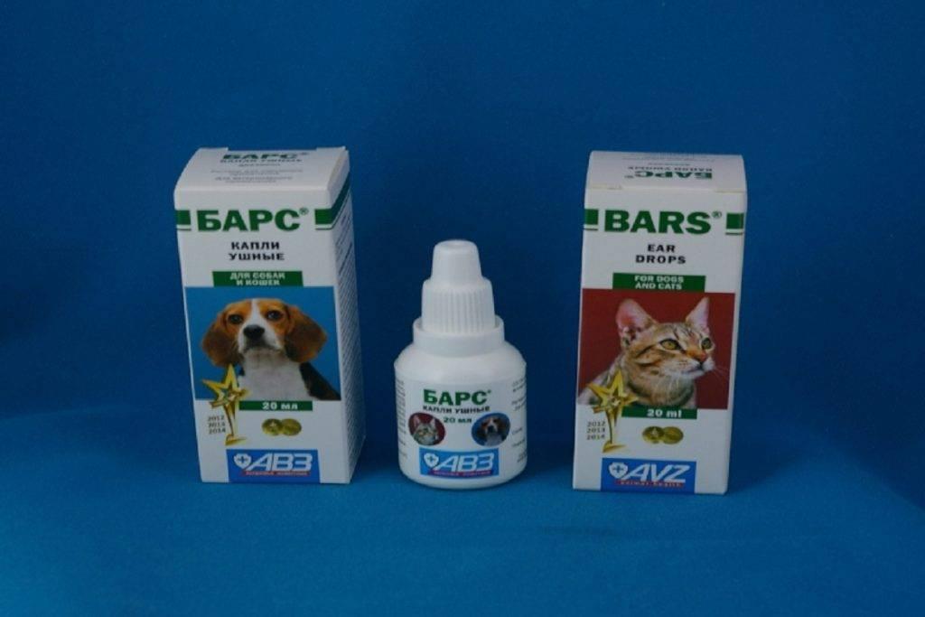 Как вывести ушного клеща у кошек: симптомы болезни, лечение препаратами и народными средствами