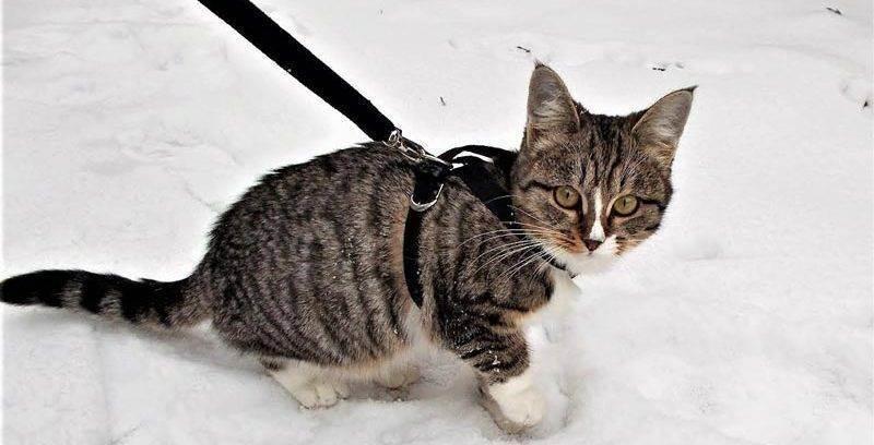Поводки для кошек — поясняем суть