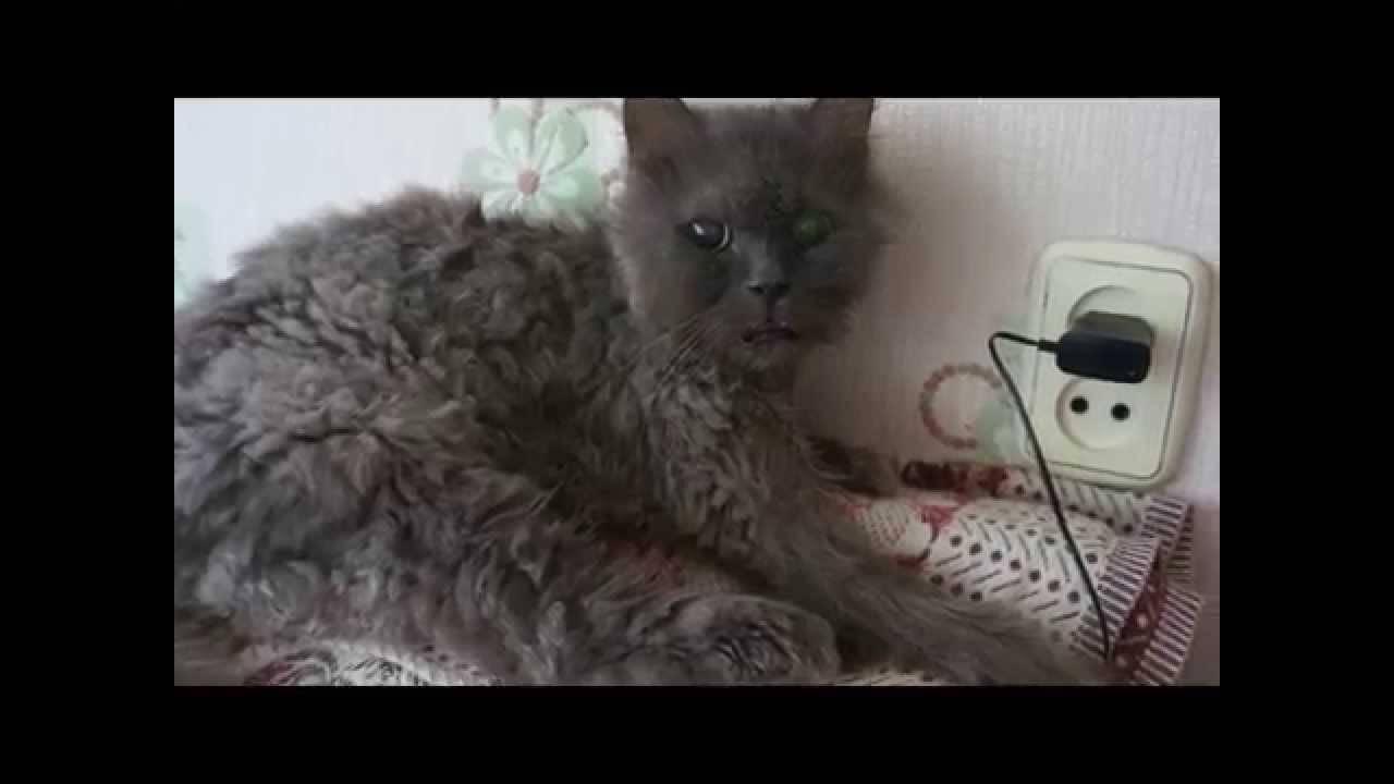 Инсульт у кошек: симптомы и лечение