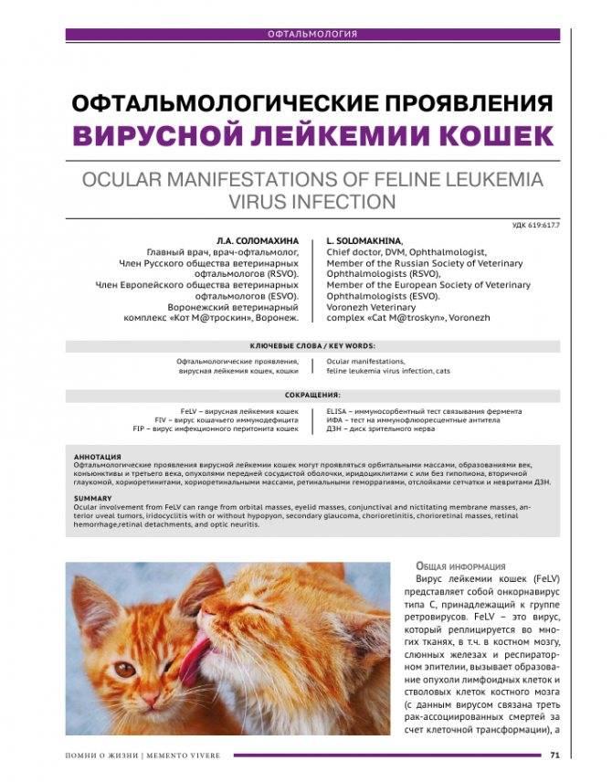 Кошки и их группы крови