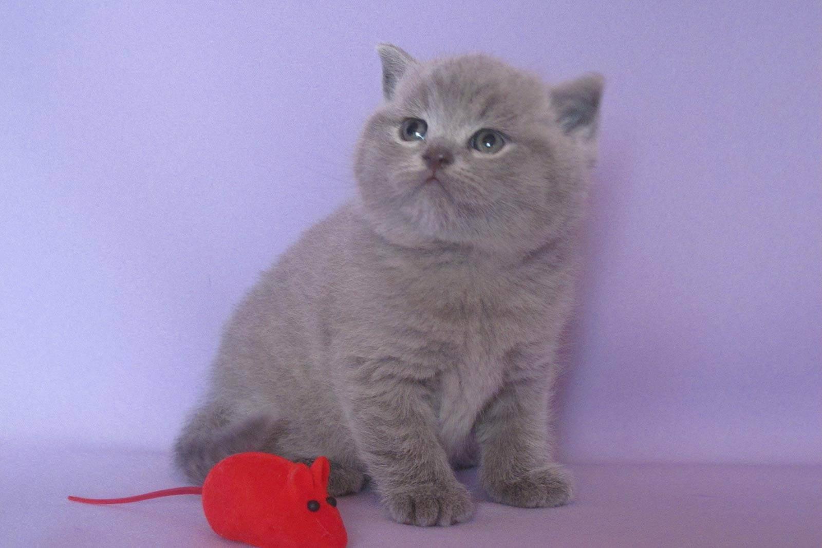 Английские клички для котов и кошек, имена для мальчиков и девочек с переводом.
