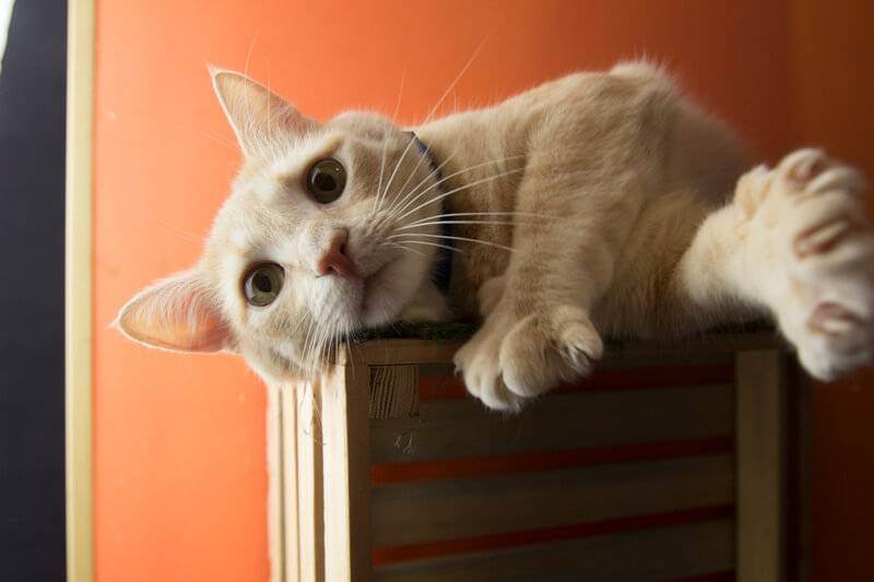 Что же делать, если котенок кусается: отучиваем быстро!