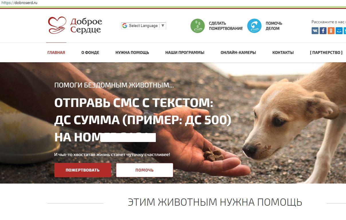 Неотложные состояния собак. первая помощь по пути к ветеринару