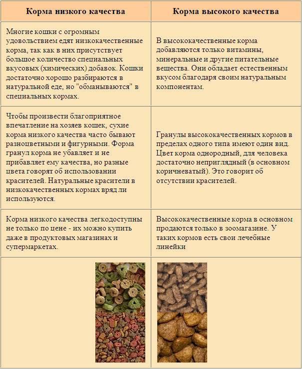 Как перевести кошку на натуральное питание мясом?