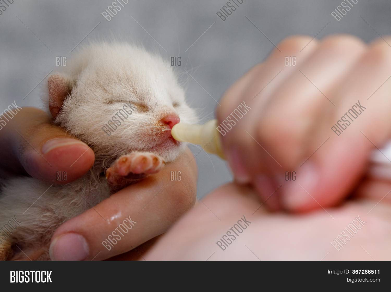 Реанимация новорожденных котят