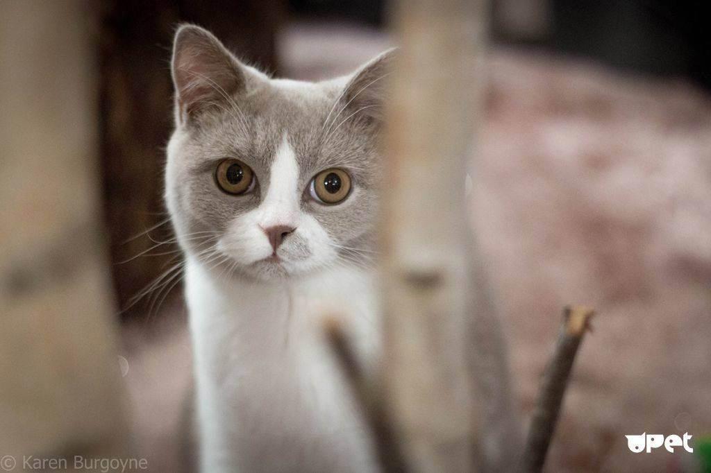 Почему кот сильно похудел, но ест хорошо?