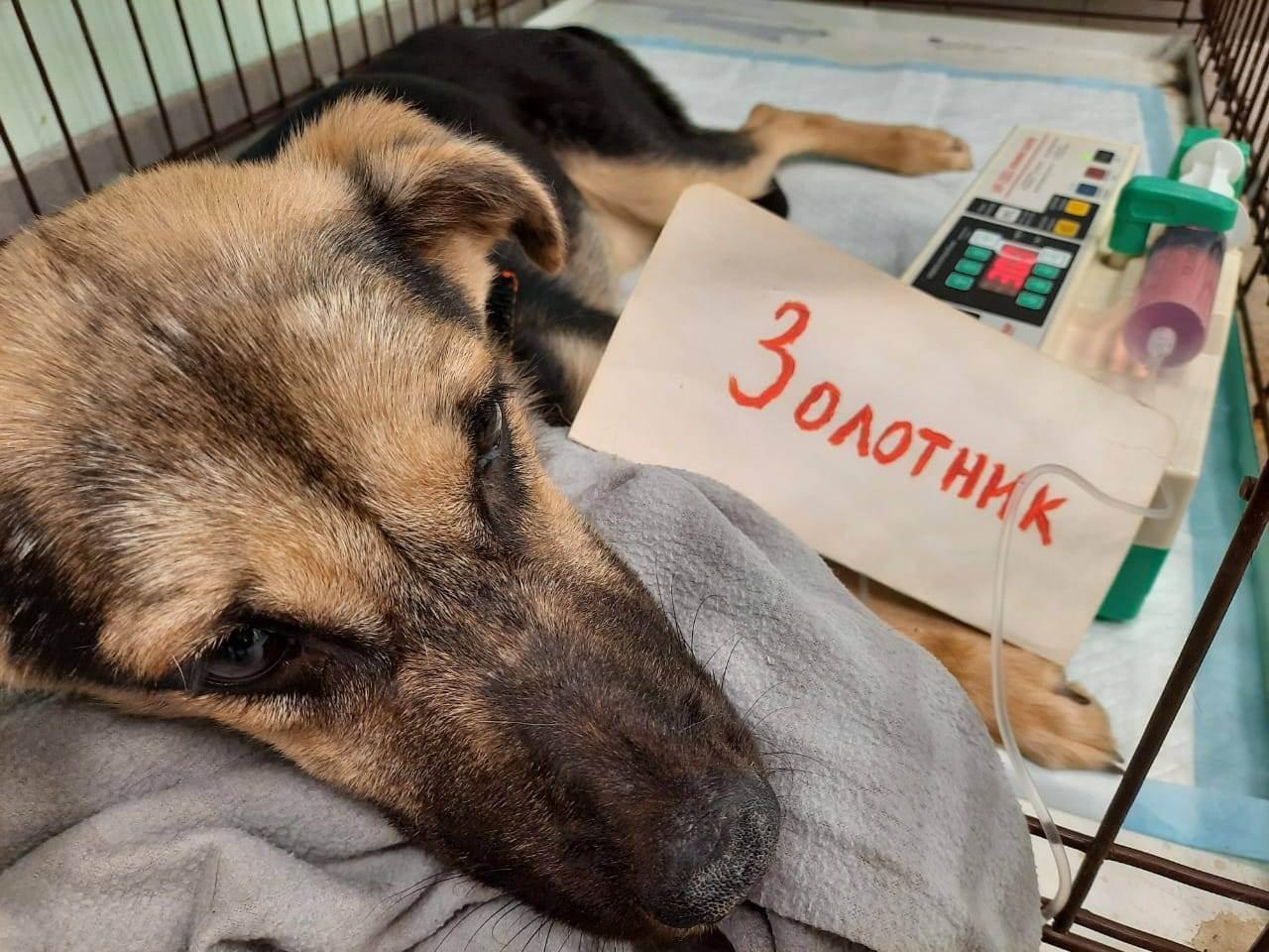 Православная церковь об усыплении животных: отношение, мнение и ответы на частые вопросы