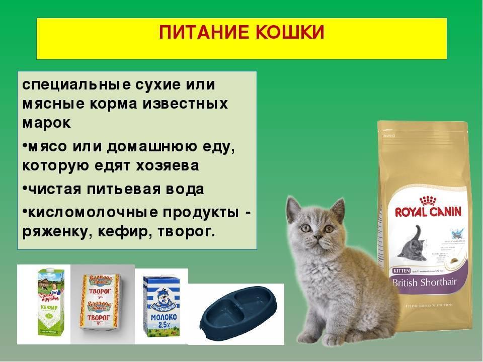 Можно ли кошкам давать молоко, а если нельзя, то почему, полезно оно или нет?