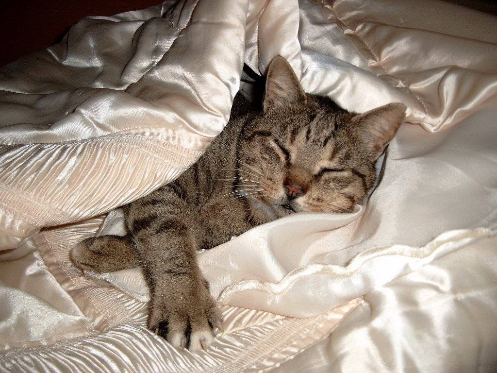 Если кот часто ложится возле больного человека: что говорят суеверия по этому поводу