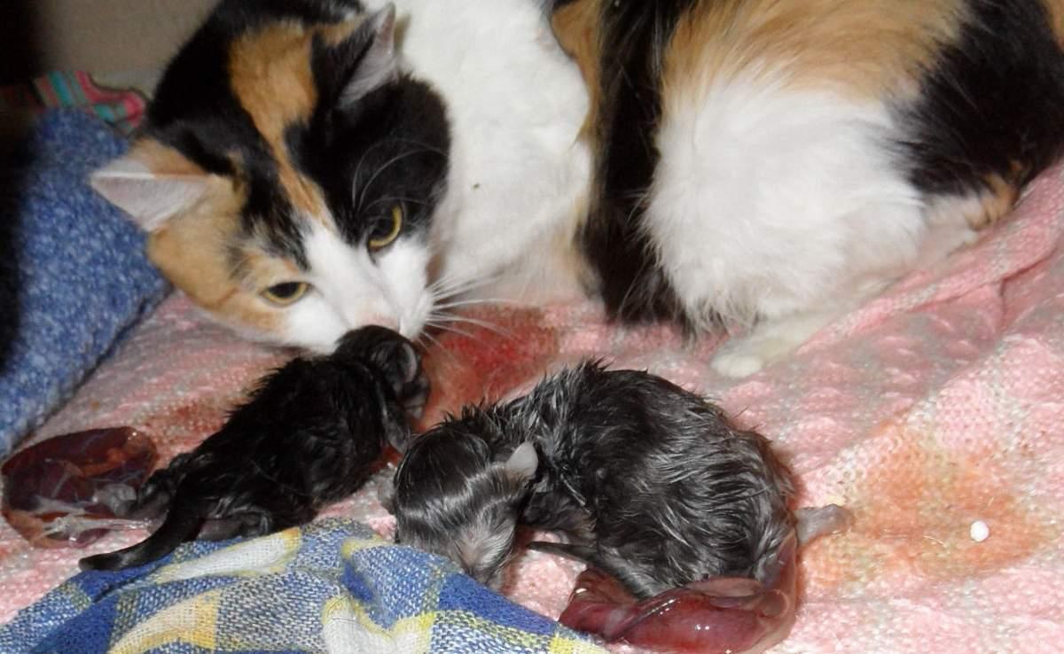 Как развивается зрение у новорожденных котят - oozoo.ru