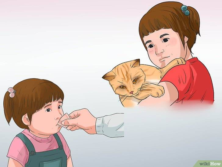 Как проявляется аллергия на кошек у детей. признаки и симптомы