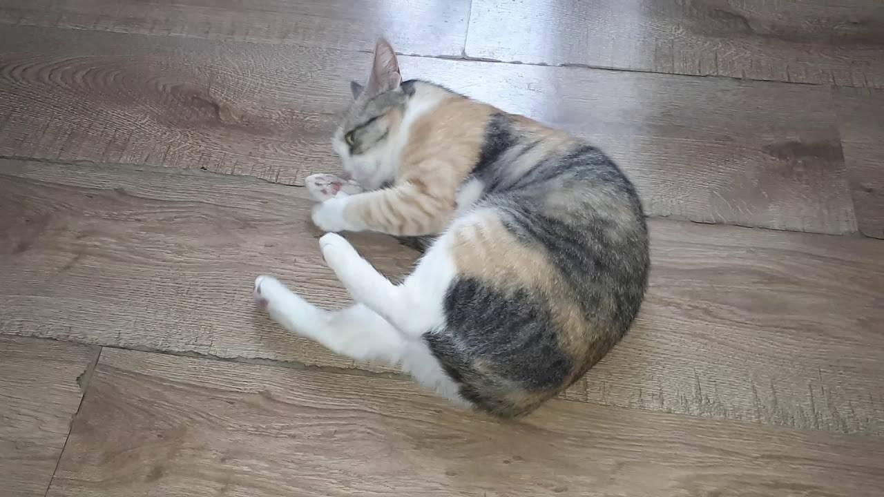 Кошка хочет кота и наоборот: что делать