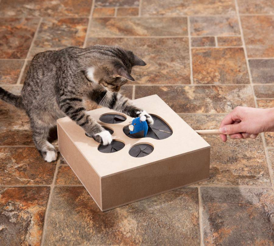Как сделать игрушку для кота или кошки своими руками в домашних условиях?