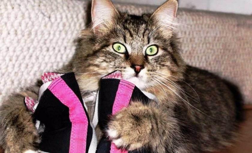 Какой конфуз! как устранить запах кошачьей мочи из обуви