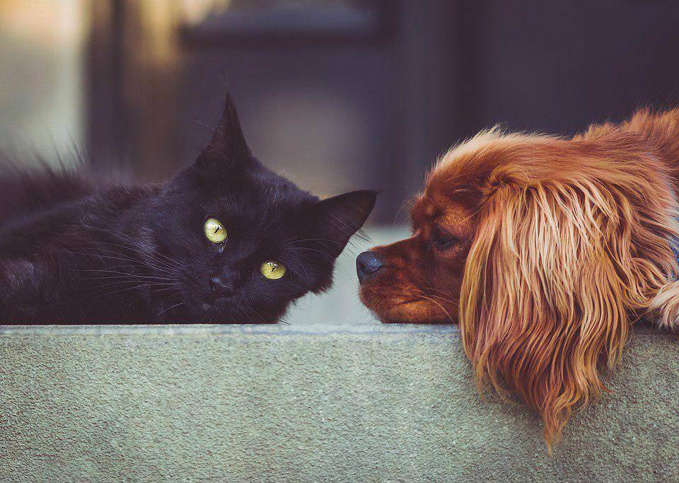 Чипирование кошек — как проводится процедура и зачем ставить метку на животное (110 фото и видео)