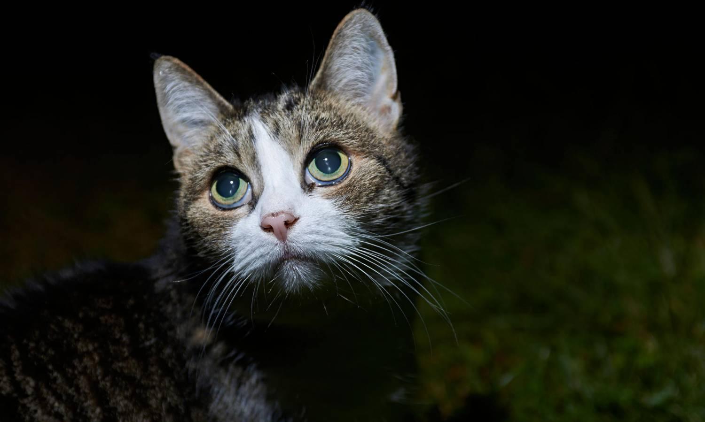 Туберкулез у кошек и котов - симптомы, лечение, препараты, причины появления | наши лучшие друзья