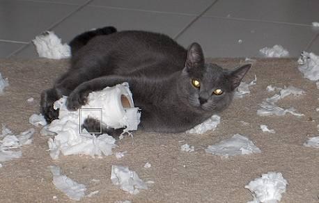 Как адаптировать кошку или кота к новому дому или квартире - усатый-полосатый