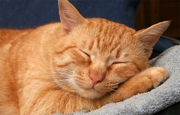 Клички для рыжих кошек девочек прикольные. как выбрать имя для котёнка-мальчика любой породы и цвета. как назвать рыжего котенка девочку интересным именем