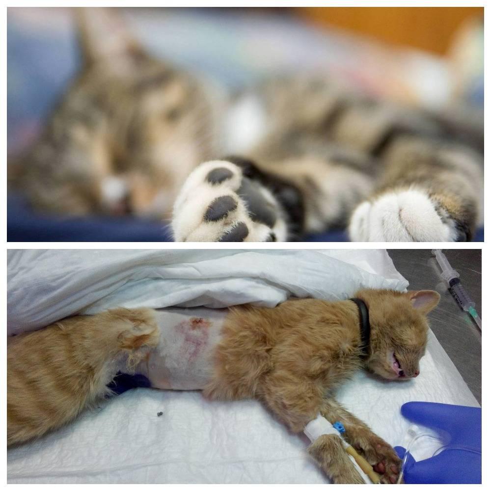 Эвтаназия кошки: вопросы гуманности