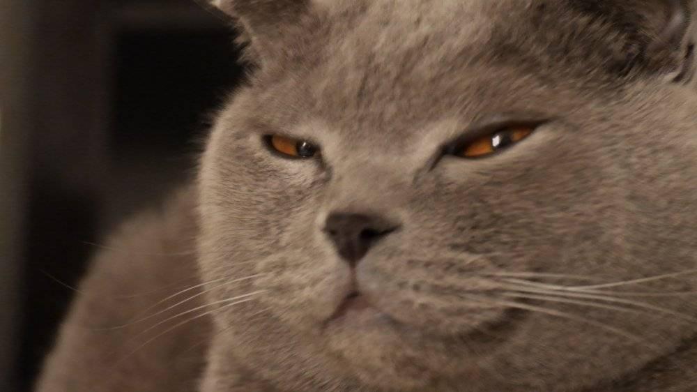 Кошка прищуривает один глаз что делать. кот щурит один глаз