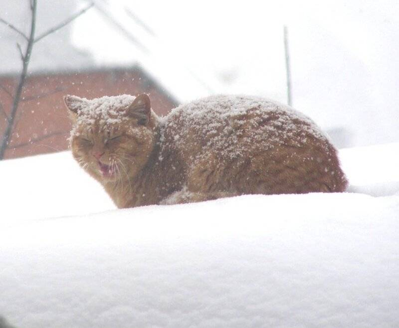 Уход за кошкой зимой - чем опасен мороз для кошек | caticat.ru