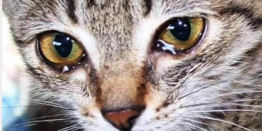 Почему кот, кошка и котята чихают и что нужно делать