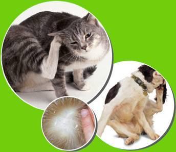 Симптомы аллергии на шерсть кота