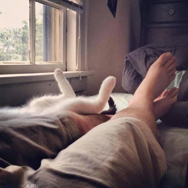 Пушистый вопрос: почему кошка стала спать между ног?