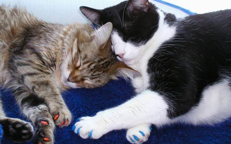 Накладки на когти для кошки – советы и рекомендации