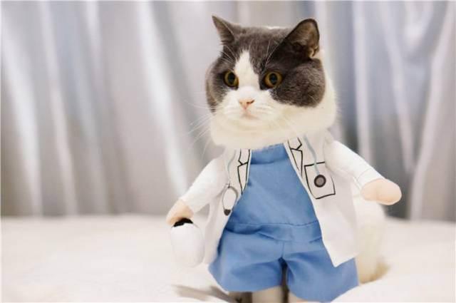 Бизнес на ветеринарной клинике