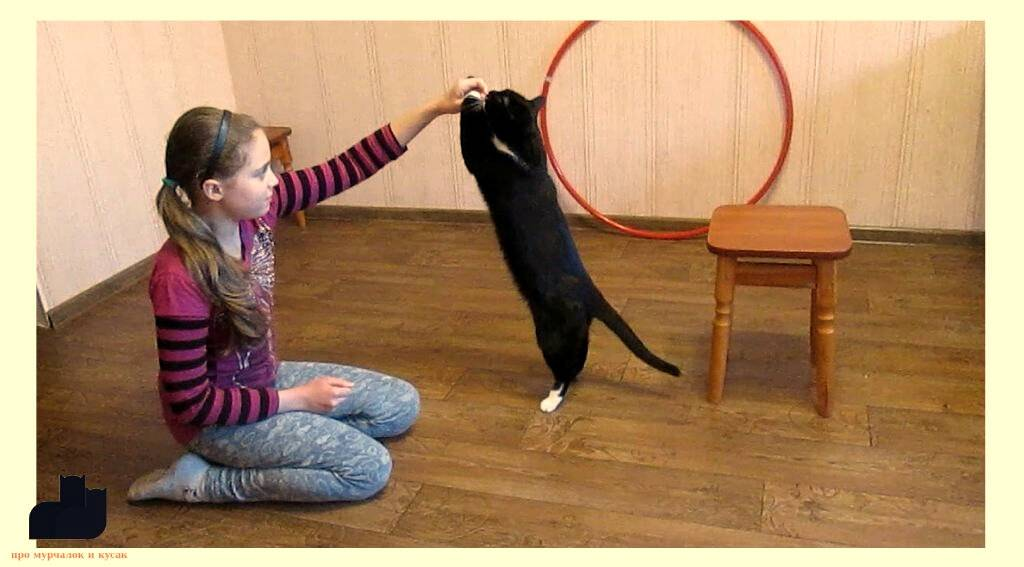 Как дрессировать кошек