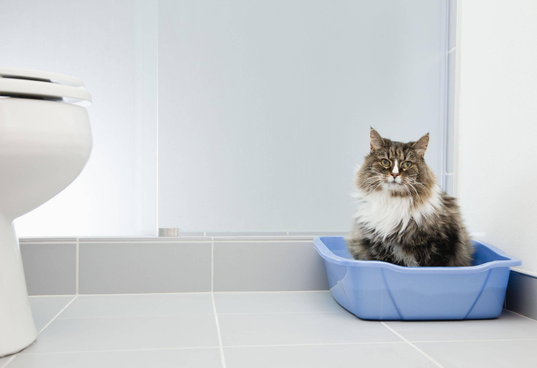 Как узнать, что у кота запор, и чем лечить его в домашних условиях?