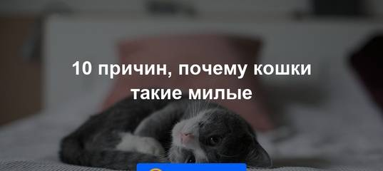 Почему кошки зевают: причины