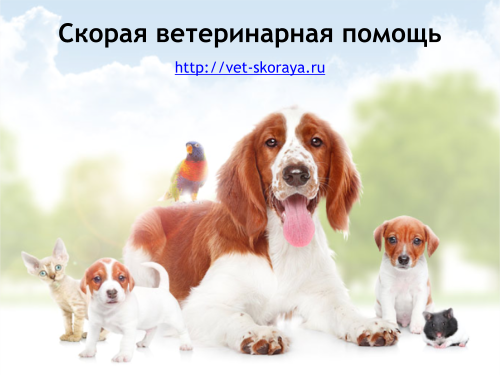 Ветеринарная помощь на дому. круглосуточная ветпомощь