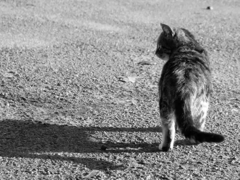Как понять, что кот скоро умрет, что делать и как правильно его похоронить?