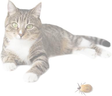 Если кошку укусил клещ: что нужно делать, а что нет | кот и кошка