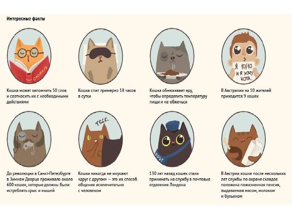 Интересные факты о кошках для детей. интересные факты о домашних кошках