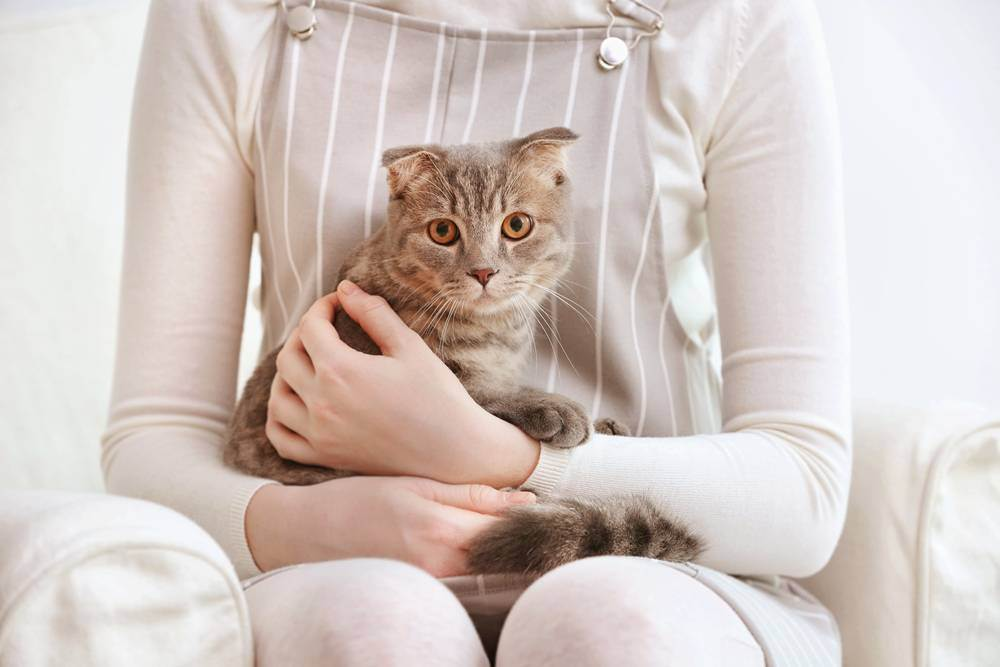 Липидоз печени у домашних кошек (симптомы и лечение)