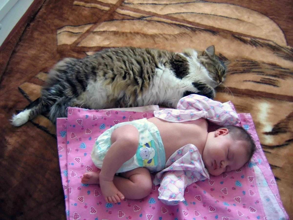 Ваша кошка и новорожденный в доме